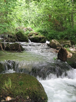 reke-nptara